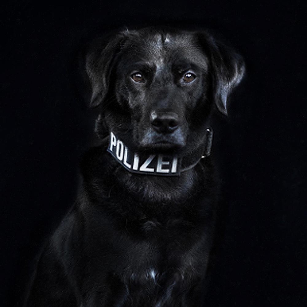 Polizeihund Louis - Suchhund vom Team der LEON DOGS