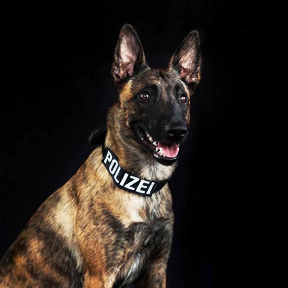 Polizeihund Ninja, Suchhund, Schutzhund vom Team der LEON DOGS