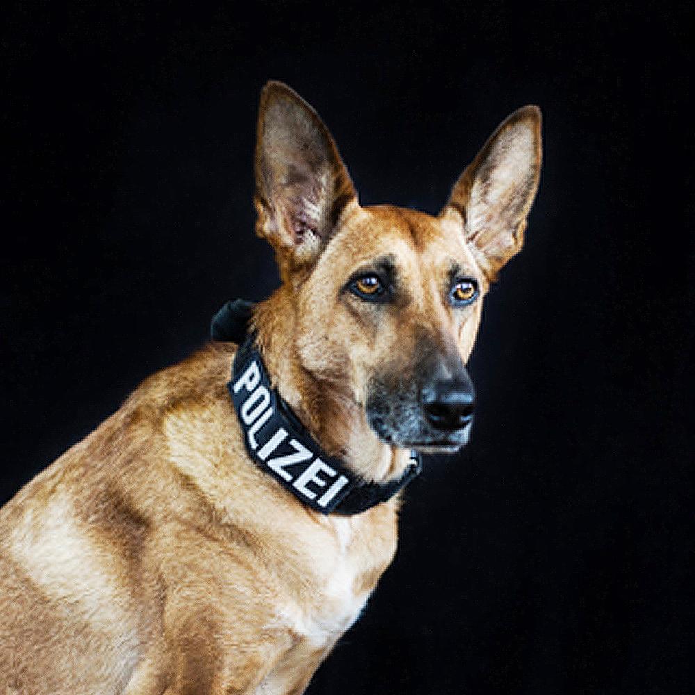 Polizeihund Pepsi, Suchhund, Schutzhund vom Team der LEON DOGS